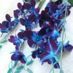 galaxy orchid