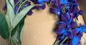 Purple blue galaxy orchid stems